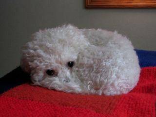 Cindy Knox's dog Beatrix