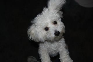 Cindy Knox's dog Buzzy
