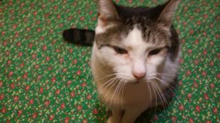 Lauri Friz's cat Lil' Kitty