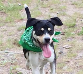 Mark Wetzel's dog Max