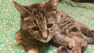 Lauri Friz's cat Zoey